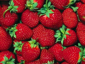 Strawberry Festival at Jacobs Farm Norwell MA