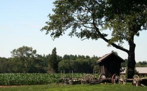 Hornstra farms cornfield